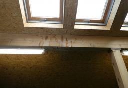 Sachverständiger Feuchteschäden Berlin - Wasserschäden Dach